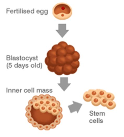 Embryonic Stem Cell Research - Old Controversy; New Debate